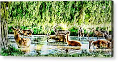 Princes Of The Forest Acrylic Print by Jason Christopher