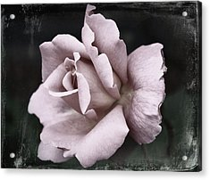 Purple Rose Acrylic Print by Cathie Tyler