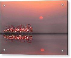 Purple Sunset Acrylic Print by Anna Cseresnjes