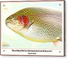Rainbow Trout In A Mountain Stream Acrylic Print by A Gurmankin