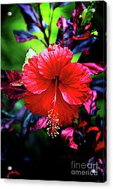 Red Hibiscus 2 Acrylic Print by Inspirational Photo Creations Audrey Woods