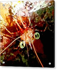 Red Night Shrimp Acrylic Print