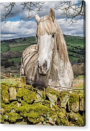 Rustic Horse Acrylic Print