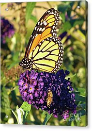 Sharing Acrylic Print by Cindy Treger