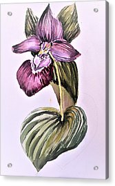 Acrylic Print featuring the painting Slipper Foot Orchid by Mindy Newman