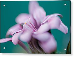 Acrylic Print featuring the photograph Soft Pink by Michaela Preston