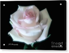 Soft Pink Rose Bud Acrylic Print by Jeannie Rhode