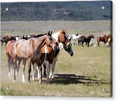 Acrylic Print featuring the digital art Sombrero Ranch Horse Drive, An Annual Event In Maybell, Colorado by Nadja Rider