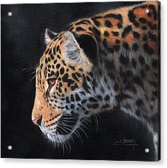 Acrylic Print featuring the painting South American Jaguar by David Stribbling