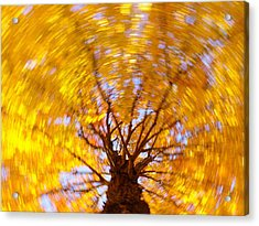 Spinning Maple Acrylic Print