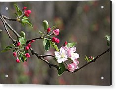 Acrylic Print featuring the photograph Blossom And Hope by Vadim Levin