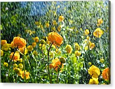 Spring Flowers In The Rain Acrylic Print