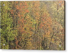 Spring Forest In Bloom Acrylic Print