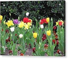 Springtime Glory Acrylic Print