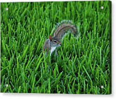 Acrylic Print featuring the photograph 2- Squirrel by Joseph Keane