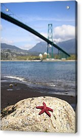 Starfish Stanley Park Vancouver Acrylic Print by Pierre Leclerc Photography