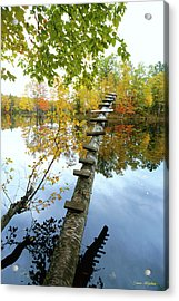 Stepping Tree - Northwoods Wisconsin Acrylic Print