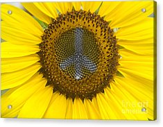 Sunflower Peace Sign Acrylic Print