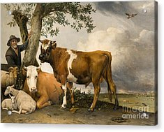The Bull Acrylic Print by Paulus Potter
