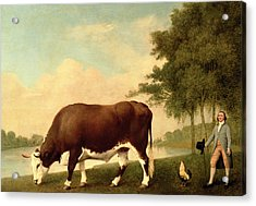 The Lincolnshire Ox Acrylic Print by George Stubbs