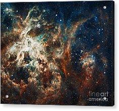 The Tarantula Nebula Acrylic Print by Nicholas Burningham