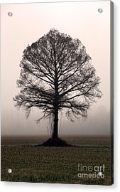 The Tree Acrylic Print by Amanda Barcon
