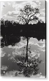 Tree Reflection Sebastopol Ca, Acrylic Print