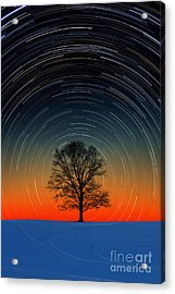Tree With Star Trails Acrylic Print by Larry Landolfi