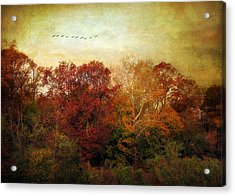 Treetops Acrylic Print by Jessica Jenney