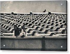 Tuxedo Cat Acrylic Print by TouTouke A Y