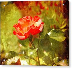 Vintage Rose Acrylic Print by Cathie Tyler