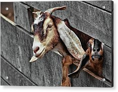 What's Going On? Acrylic Print by JAMART Photography