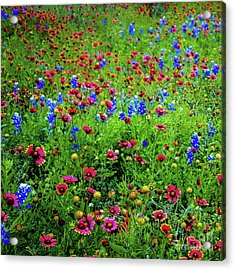 Acrylic Print featuring the photograph Wildflowers In Bloom by D Davila