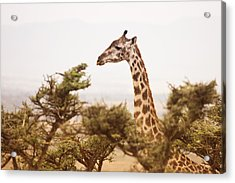 Wildlife Acrylic Print by Vanessa Gavalya