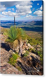 Acrylic Print featuring the photograph Wilpena Pound  by Bill  Robinson