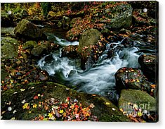 Wolf Creek New River Gorge Acrylic Print by Thomas R Fletcher