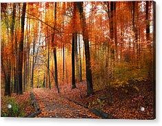 Woodland Passage Acrylic Print