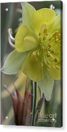 Yellow Flower 4 Acrylic Print