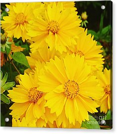 Yellow Flowers  Acrylic Print by Sobajan Tellfortunes
