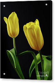 Acrylic Print featuring the photograph Yellow Tulips by Dariusz Gudowicz