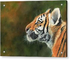 Acrylic Print featuring the painting Young Amur Tiger  by David Stribbling