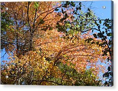 Autumn In Ma Acrylic Print by Victoria Wang