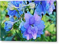 2015 Mid September At The Garden Larkspur 2 Acrylic Print