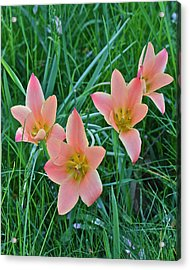 2015 Spring At The Gardens Meadow Garden Tulips 3 Acrylic Print