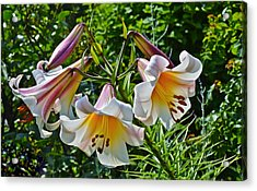 2015 Summer At The Garden Lilies In The Rose Garden 1 Acrylic Print