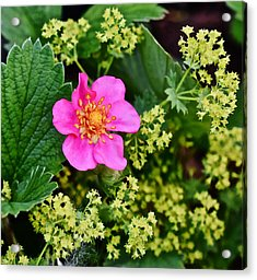 2015 Summer's Eve At The Garden Lipstick Strawberry Acrylic Print