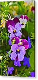 2015 Summer's Eve At The Garden Pansy Totem Acrylic Print