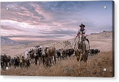 2016 Reno Cattle Drive Acrylic Print by Rick Mosher