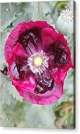 Coastal Flowers Acrylic Print