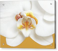 Mia In A Moth Orchid Acrylic Print
